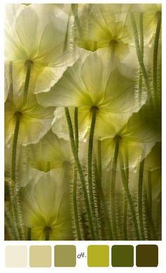 #cream, #yellows, #greens flower #palette
