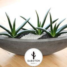 House Plants Decor, Plant Decor, Succulent Terrarium, Cacti And Succulents, Jardin Decor, Dish Garden, Miniature Fairy Gardens, Plant Care, Garden Projects