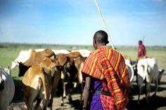 Hope for Fighting Gender-Based Violence in Zambia African Impact, Modern City, Cattle, Kenya, Traveling By Yourself, Gender, Gado Gado, Music Genre