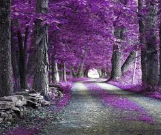 Textures Nature Misc The Purple Forest Wallpaper Purple Love, All Things Purple, Shades Of Purple, Purple Rain, Beautiful World, Beautiful Places, Beautiful Scenery, Wow Photo, Theme Nature