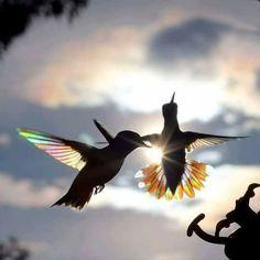 Dark Photography, Animal Photography, Amazing Photography, Photography Ideas, Beautiful Birds, Animals Beautiful, Hummingbird Wings, Bild Tattoos, Nature Animals