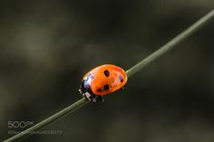 Woa beautiful pic ladybug on straw