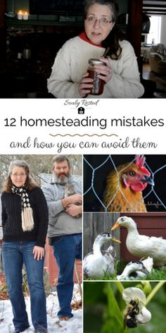 As embarassing as it is, my mistakes around our homestead seem to be the most popular things I write about. And honestly, I'm thankful that readers can learn from my mistakes, so today I'm listing the top twelve... from chicken to maple syrup to dog training to rug cleaning, it's all here.