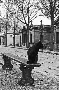 Li'l Panther Livin' in a Super Quiet Neighborhood