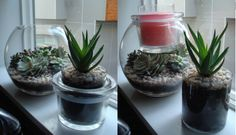 PartyLite Clearly Creative GloLite Jar Holder succulent terrarium.  I reused an empty GloLite jar for the aloe vera so I can still but a jar in the top. #PartyLiteDIY www.partylite.biz/cberger
