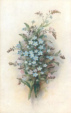 Blue & purple forget-me nots ~ 1918