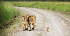 Les 25 photos les plus mignonnes qui reflètent l'amour parental chez les animaux