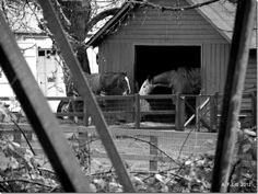 Photo of the Day by A. F. Litt: February 2, 2012, Horses