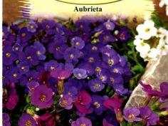 SzentesiMag | Pázsit viola vetőmag rendelés Plants, Plant, Planets
