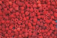 Heritage Red Raspberry Zone 8  pink blooms red fruit  ripens in july and september  tart,mild and medium fruit ph  6.0 - 6.8