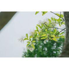 After Rain #2  . #photography #photo #tree #sky #하늘 #봄 #나무