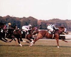 SECRETARIAT - ORIGINAL 1973 MAN O' WAR STAKES PHOTO! in Sports Mem, Cards & Fan Shop, Fan Apparel & Souvenirs, Horse Racing | eBay