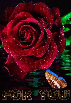Decent Image Scraps: Animated Roses 5