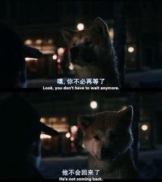 hachiko Sad Movies, Great Movies, Tv Show Quotes, Movie Quotes, Cinema Movies, Movie Tv, Japanese Akita, Mood And Tone, Frases