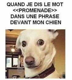 Idem.... ;) C'est fou la réaction :) c'est pareil avec mon chien Loustik