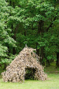 Imagini pentru Hoia-Baciu Forest in Cluj-Napoca, Romania Scary Places, Haunted Places, Abandoned Places, Hoia Baciu Forest, Wonderful Places, Beautiful Places, Places To Travel, Places To Visit, Haunted Forest