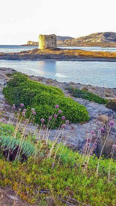 Stintino -Sassari -Sardinia -Sardegna #Cerdeña #Sardinien