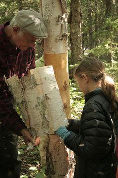 Harvesting Birch Bark How to harvest birch bark safely : Instructables Tree Bark Crafts, Birch Bark Crafts, Wood Crafts, Birch Bark Decor, Birch Bark Baskets, Birch Decorations, Birch Logs, Birch Branches, Birch Trees