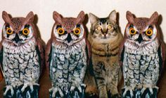 cats and owls - Google Search