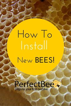 Essential Reading for the New Beekeeper: How to Install New Bees! This In-Depth article tells you everything you need to know!
