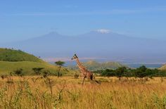 Why I can never be happy on another continent  {5 reasons why you should visit Chyulu Hills - Africa Geographic Magazine} Blog