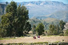 The Colca region is unique in that the locals live like their ancestors did centuries ago. Photo by MajorMultimedia.com