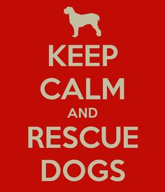 Please rescue dogs! When you rescue one dog you actually save TWO dogs' lives....the one you rescued and the one you made room for at the shelter.