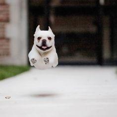 flying puppy!