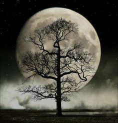 Moon, tree, spooky night...what's not to love :)