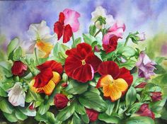 Red Pansies, White Pansies, Yellow and Red Pansies with many buds and leaves, original flower watercolor painting, Rote Stiefmütterchen, Rot-gelbe Stiefmütterchen, Weiße Stiefmütterchen, Blumengemälde, Blumenbild in Aquarell, Doris Joa