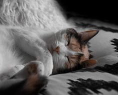 protectyourcat | الصفحة 3 من 3 | All about cats and more! Cute Cats And Dogs, I Love Cats, Cats And Kittens, Fluffy Animals, Cute Animals, Brown Cat, Pet News, Cat Sleeping, All About Cats