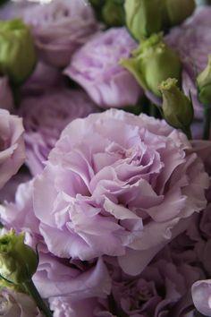 Lavender Lisianthus will compliment the petite centerpiece arrangements and the Bridal Bouquet
