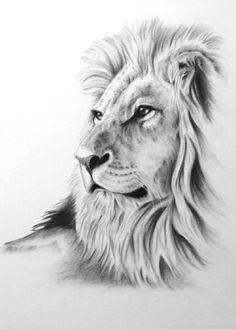 "Charcoal Drawing, 8 ""x ORIGINAL Lion Art, Lion Drawing, Lion Sketch, Charcoal - diy tattoo images - tattoos Animal Sketches, Animal Drawings, Pencil Drawings, Drawing Animals, Hipster Drawings, Pencil Art, Art Sketches, Lion Sketch, Cat Sketch"
