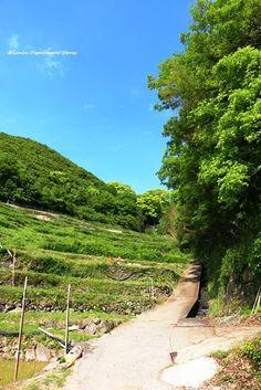 青空に囲まれて綺麗な中山千枚田。中山千枚田の観光スポット。