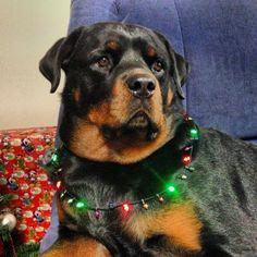BIg Dog Healthcare / www.PetWellbeing.org
