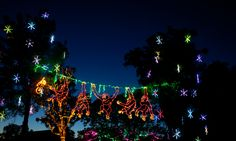 Swing over to the Phoenix Zoo for ZooLights!