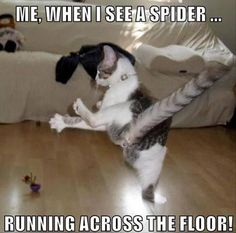 Funny, Memes, Pictures: when-I-see-a-spider