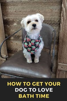How to get your dog to love bath time Best Puppies, Cute Puppies, Best Dogs, Dogs And Puppies, Potty Training Puppy Apartment, Puppy Grooming, Dog Eyes, Bath Time, Dog Life