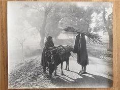 Rare Randolph Holmes of India photograph 1915-1920 part of a larger collection currently on eBay