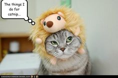 Aww. I would give my cats nip all the time if they did that themselves!