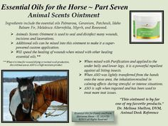 Young Living Animal Scents Ointment for horses www.healingforus.com