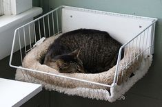 it never occurred to me to attach a cat bed to the wall. it never occurred to me to attach a cat bed to the wall. Diy Pour Chien, Catsu The Cat, Cat Towers, Cat Shelves, Cat Enclosure, Cat Condo, Cat Room, Small Cat, Cat Furniture