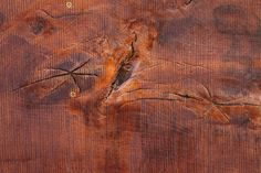 texture of bark wood Graphics Brown wood texture. Abstract background, empty template by Naltik