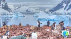 Viajar na Antártida - Volta ao Mundo