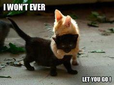 I won't ever let you go!