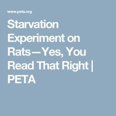 Starvation Experiment on Rats—Yes, You Read That Right | PETA