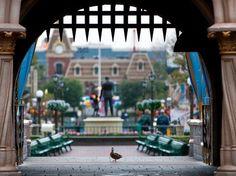:)  duck.