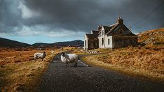 The little magic moments of Scotland | www.patricemestari.… | Flickr
