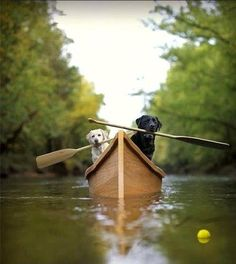 """Row, row, row your boat!""  (I'm sure some little guy is taking this picture of his two friends)"