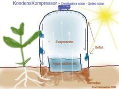 El riego por goteo solar es muy fácil de aplicar. Solo se necesita reciclar un par de botellas y un poco de agua, para olvidarnos de regar una temporada.